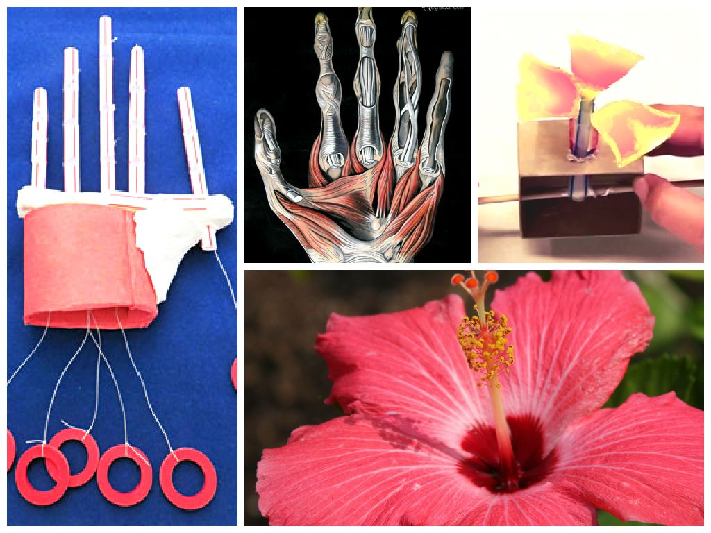 TAME Engineering Adventure: Biomimicry! A hands-on activity challenging middle school and high school students to build robot hands and flowers, to think like biologists and biomedical engineers!